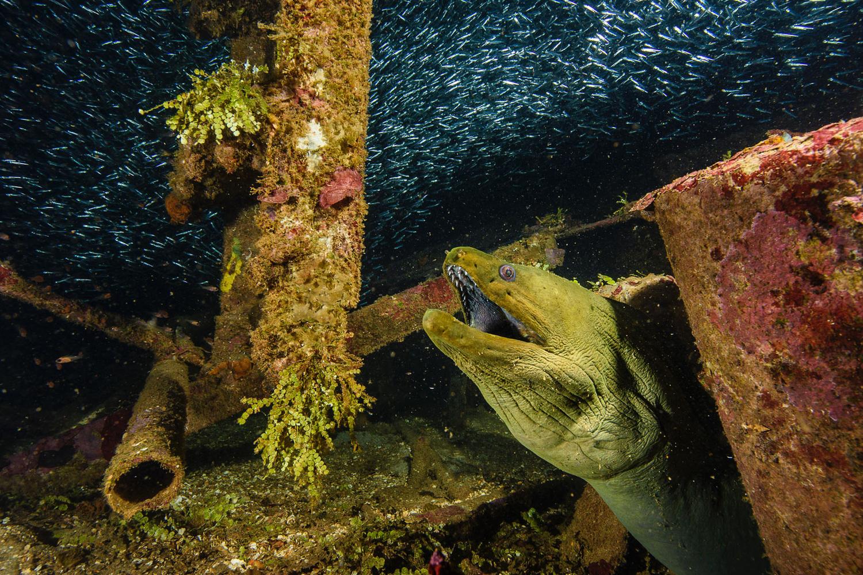 Wreck Eel by Dalton Hamm