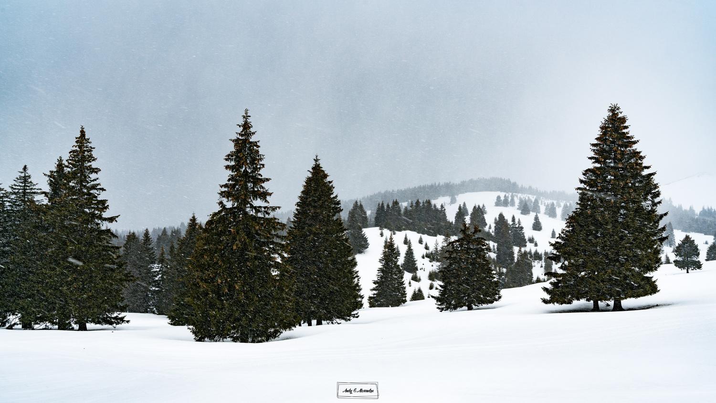 Winter scene by Ghita Alexandru