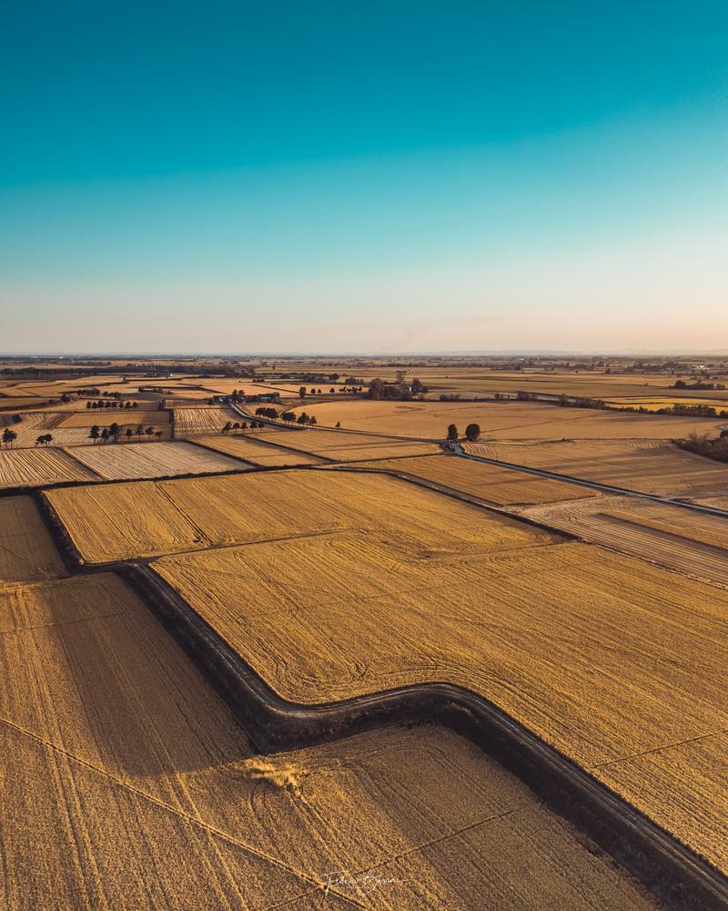 Golden Riceland by Federico Lorenzo Barra