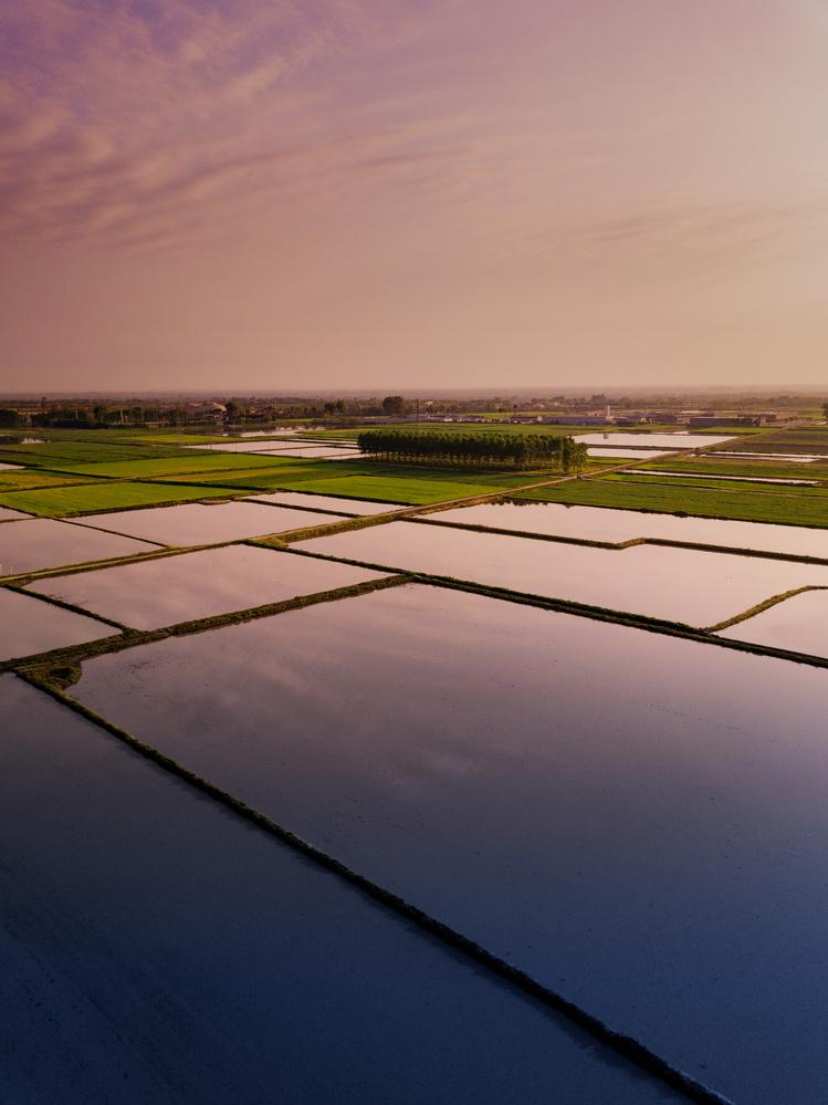 Flooded Riceland by Federico Lorenzo Barra