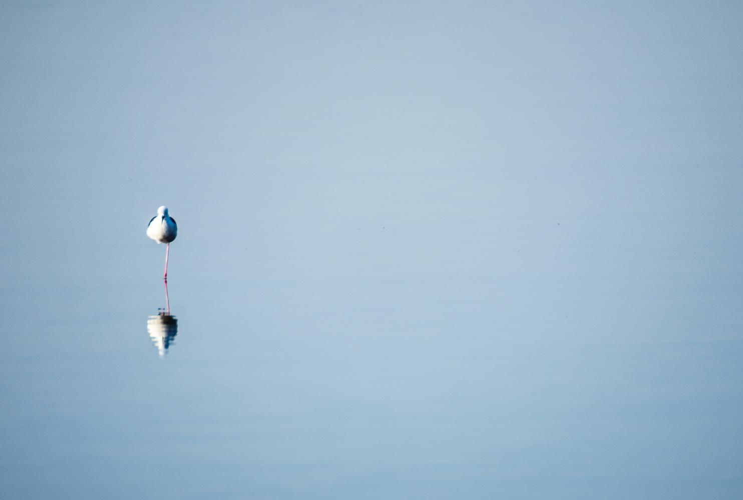 Singular Stillness Reflected by Marcus Sapir