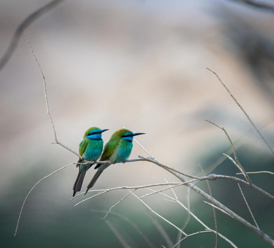 Quite a Pair by Marcus Sapir