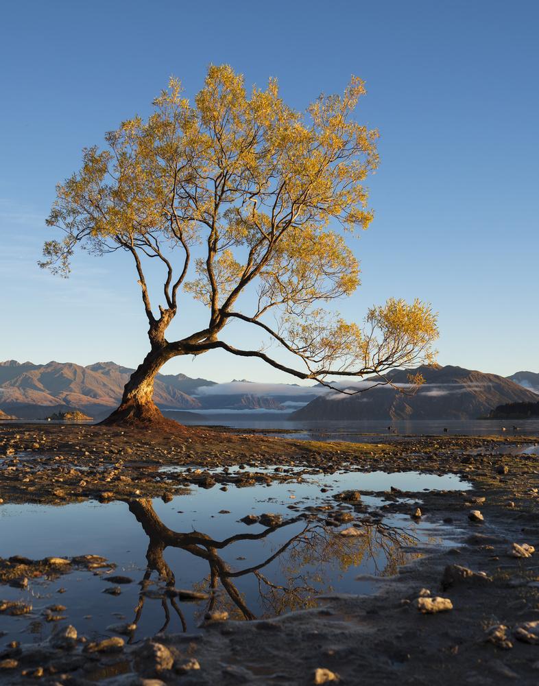 That Wanaka Tree by Autumn Schrock