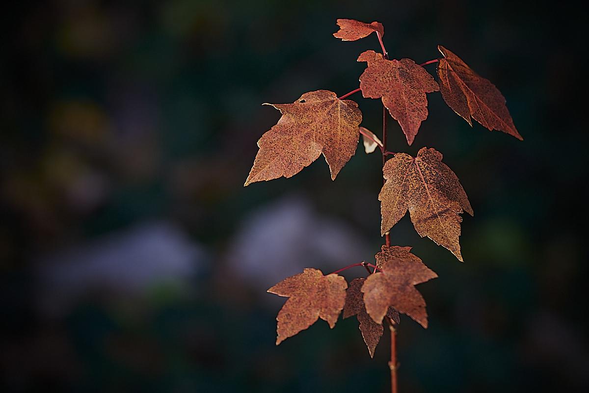 Leaves by Frank Davis