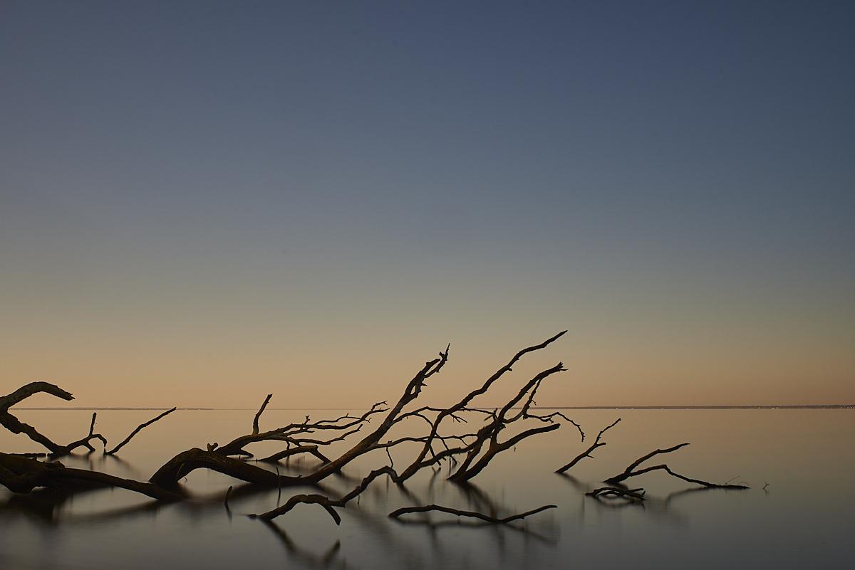 Branch of the Potomac by Frank Davis