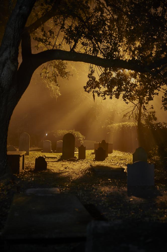 Charleston Cemetery by Frank Davis