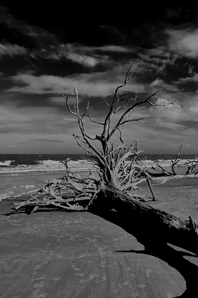 Driftwood Beach by Frank Davis
