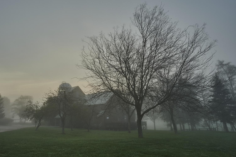 Fall Fog by Frank Davis