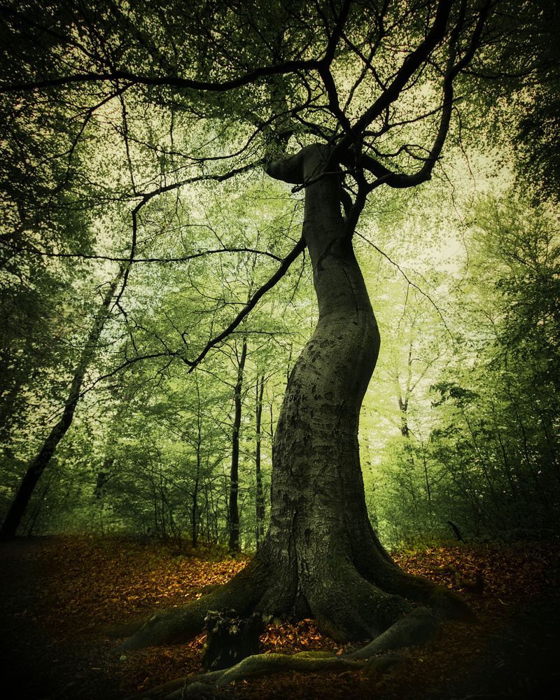 The witchtree of Vestfold by Roger Kristiansen