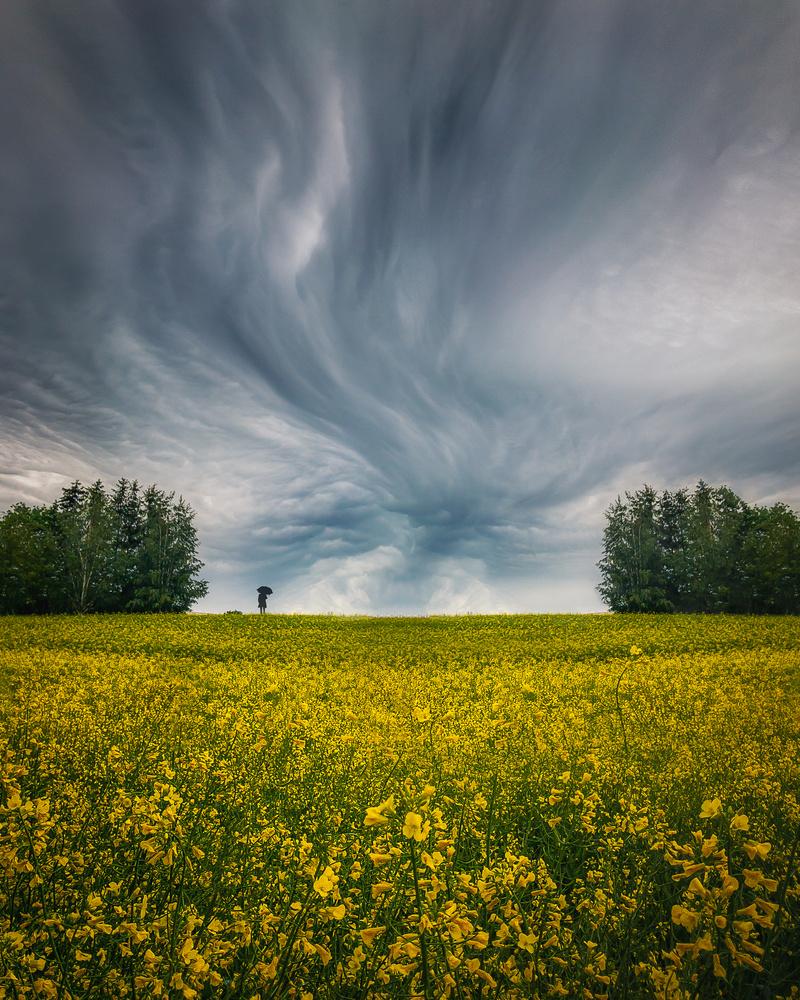 Field of wildflowers by Roger Kristiansen