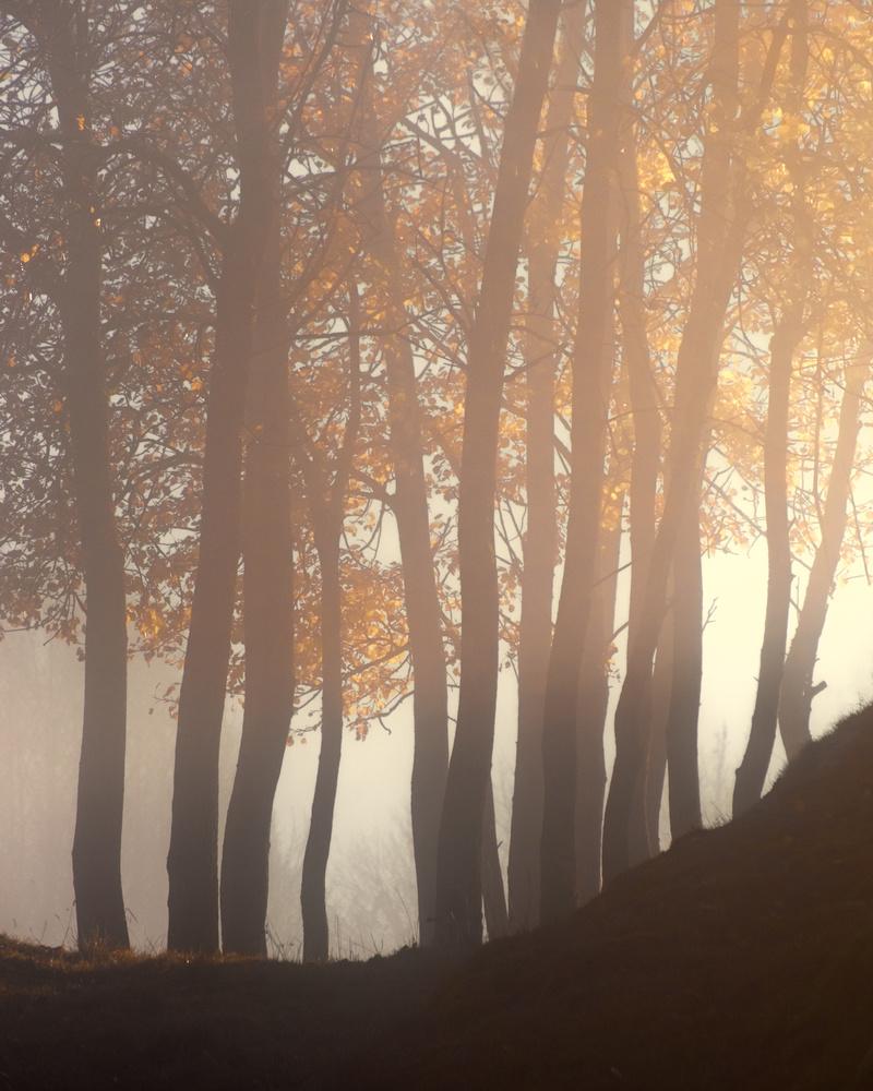 Trees in autumn glow by Roger Kristiansen