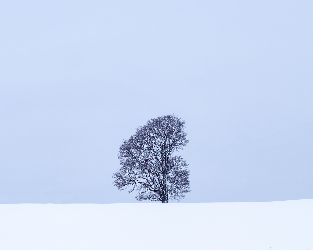 Lone tree on snowy hill.. by Roger Kristiansen