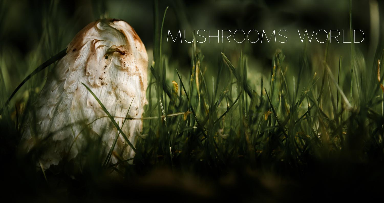 mushrooms world by Peter N.