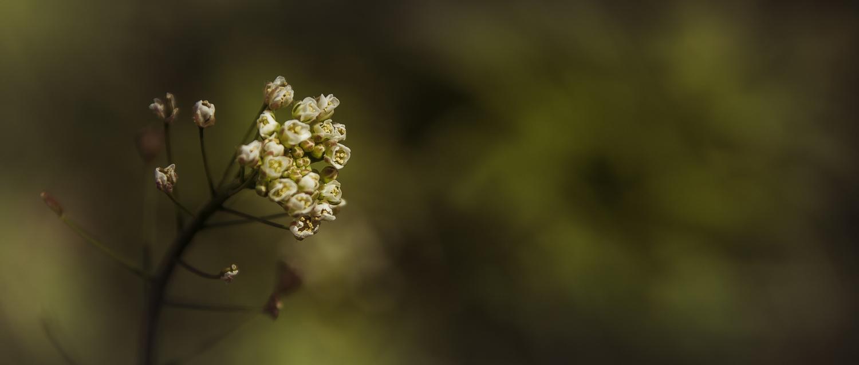 Nature in Cinemascope #5 by Peter N.