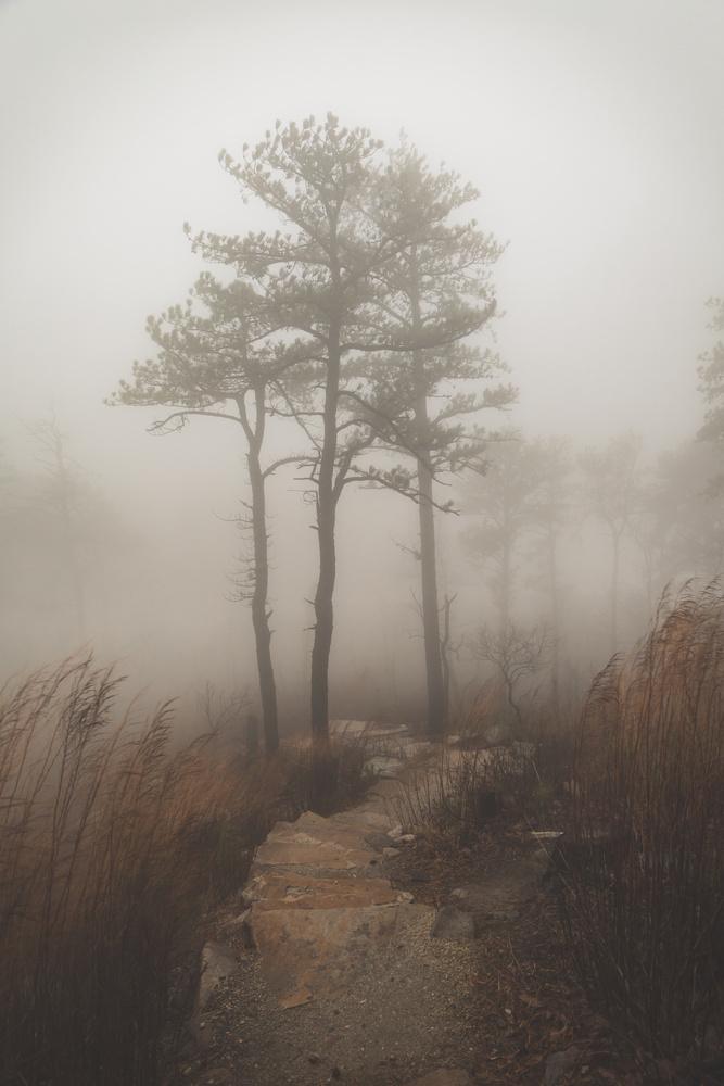 Into the mist by Trevor McGoldrick