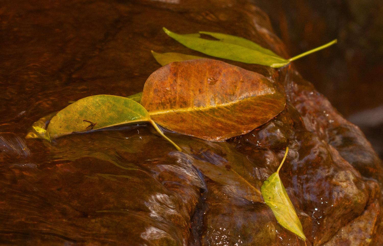 Fall is upon us by Lian van den Heever