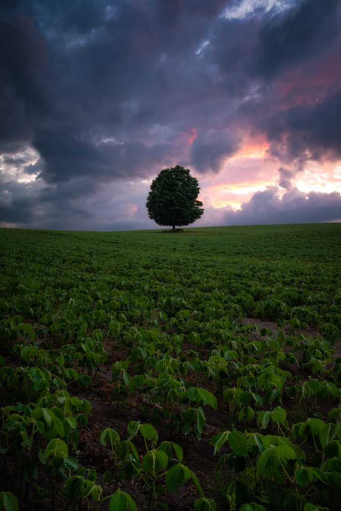 After the Storm by Will Dunn
