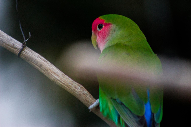 Parrot by Tm Sk8er