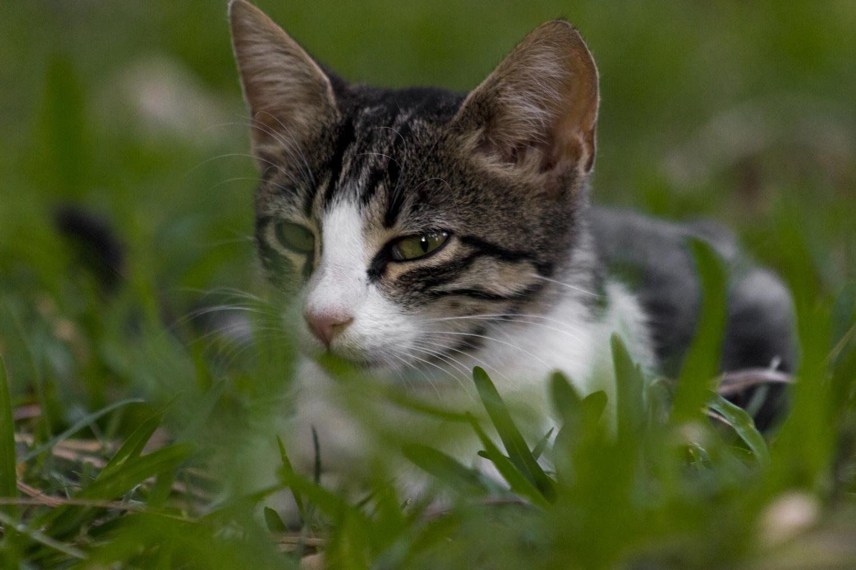 Mad Cat by Tm Sk8er