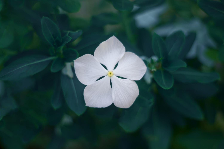 White by Tm Sk8er