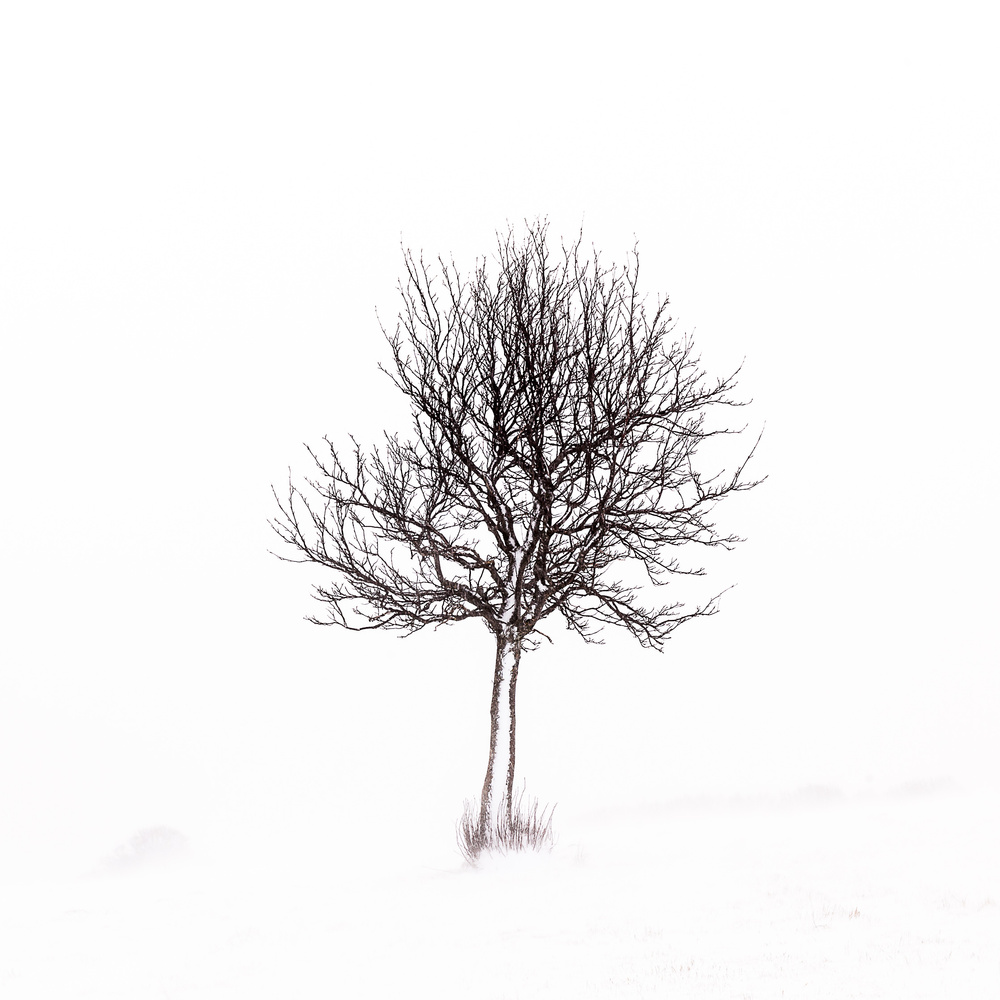 minimalist view of winter in the french Massif central by david huguet