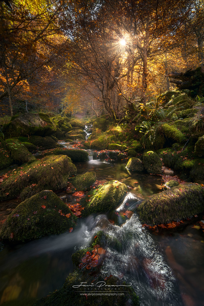 Autumn is coming by Javier Pozas