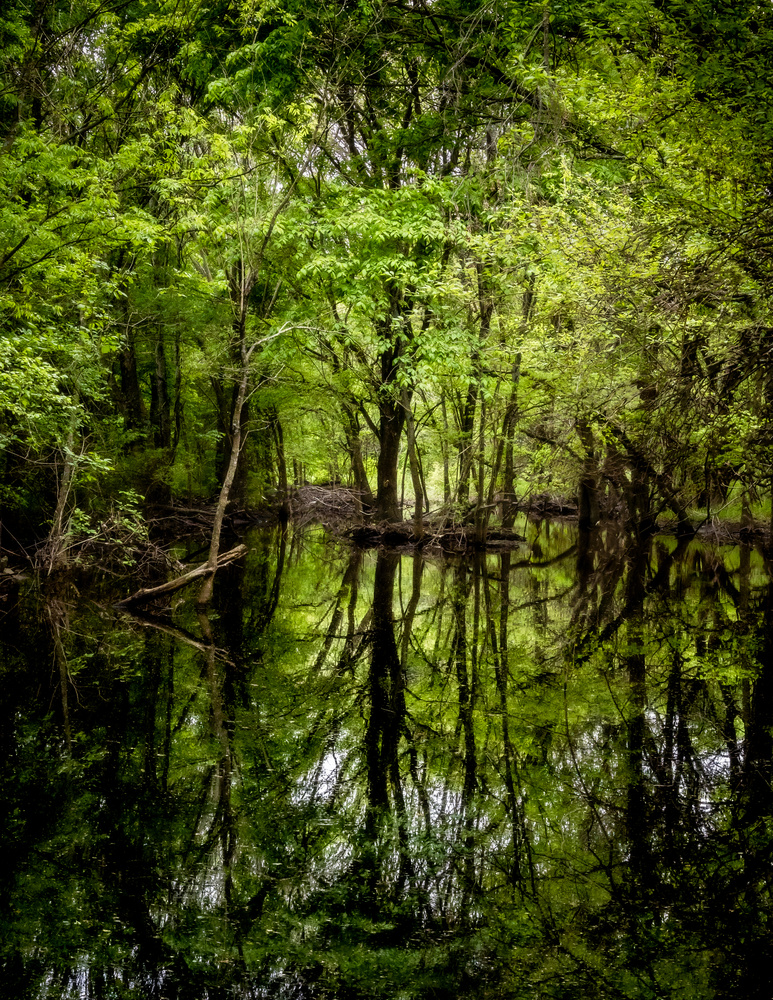 Forest Reflections by anthony crouch