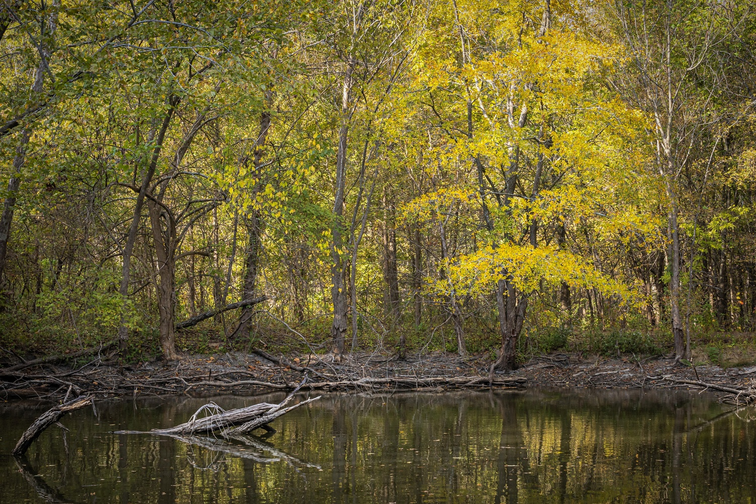East Texas Pond by anthony crouch