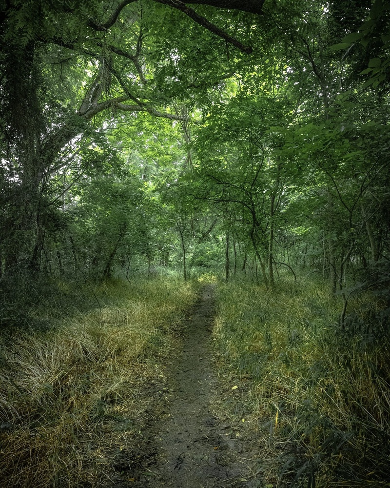 Green Forest Trail by anthony crouch