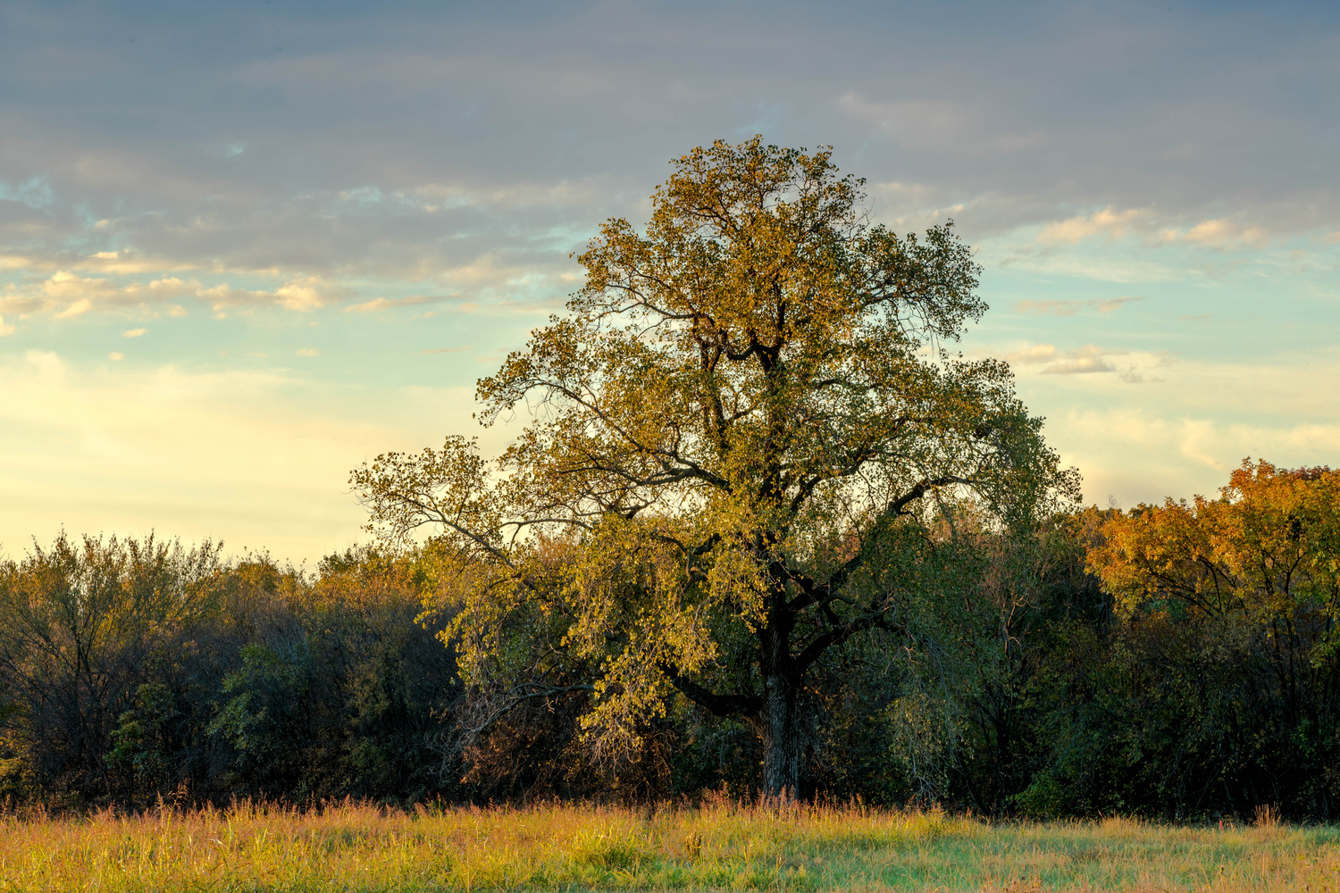 Tree basking in Fall Sunrise by anthony crouch