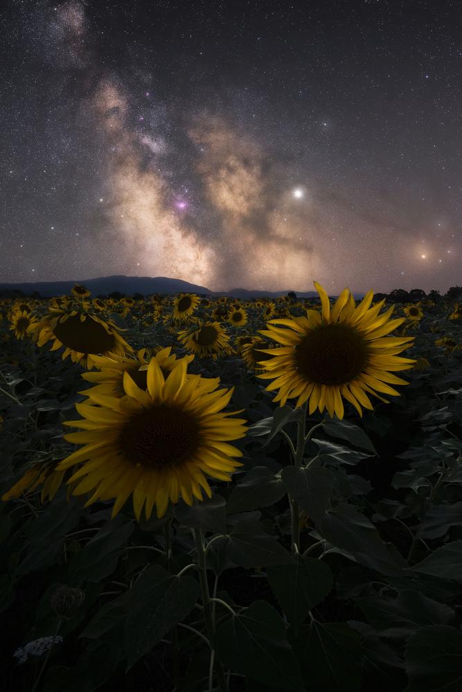 StarFlowers by Davide Donati