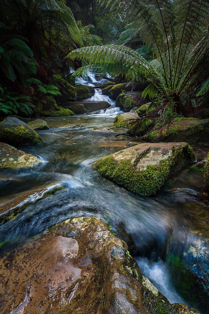 Hidden Oasis by Mark Phillips
