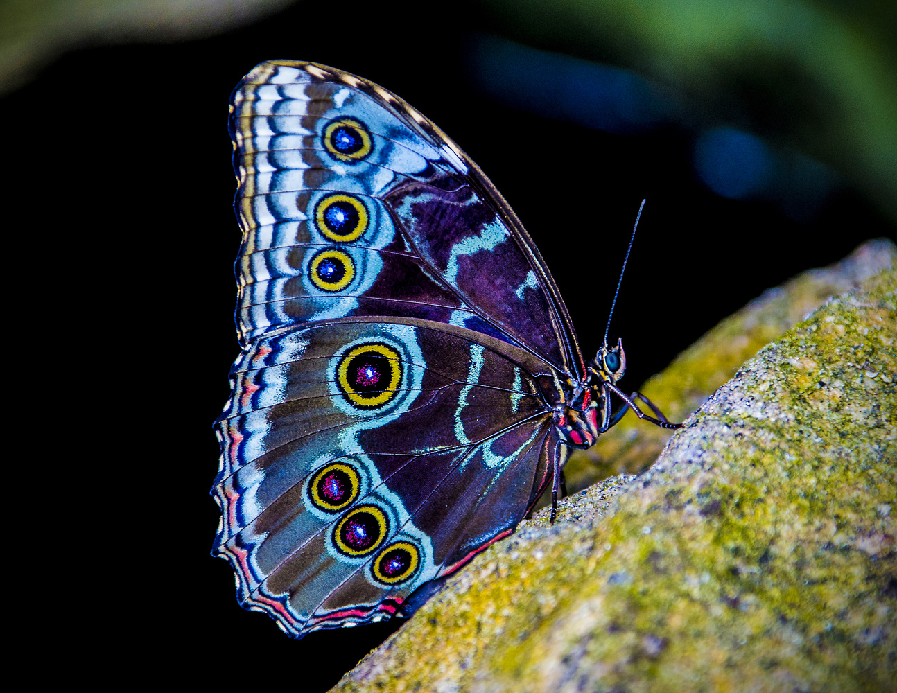Colorful butterfly by Paul Drajem