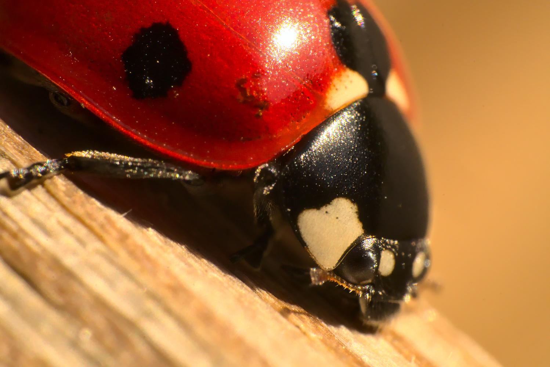 Ladybug by Lukasz J