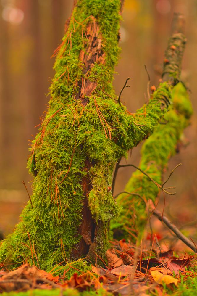 Autumn colors #4 by Lukasz J