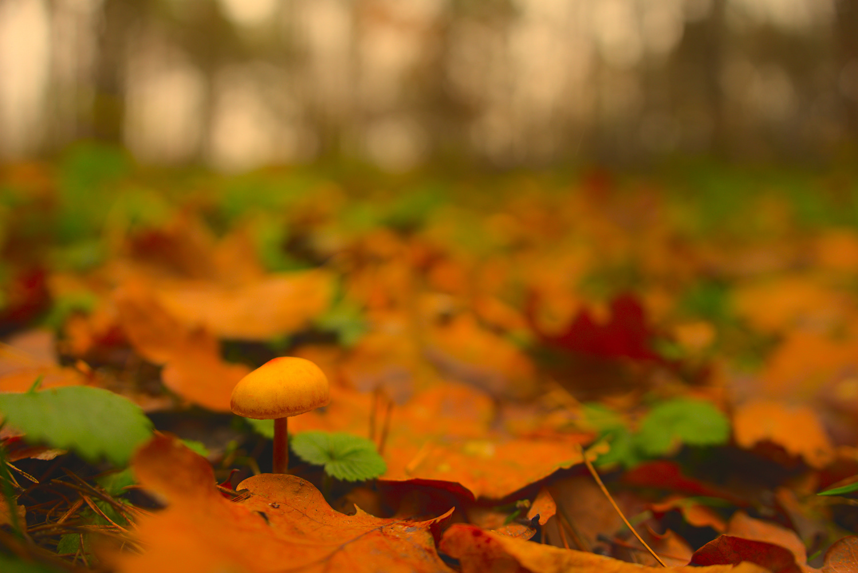Autumn colors #3 by Lukasz J