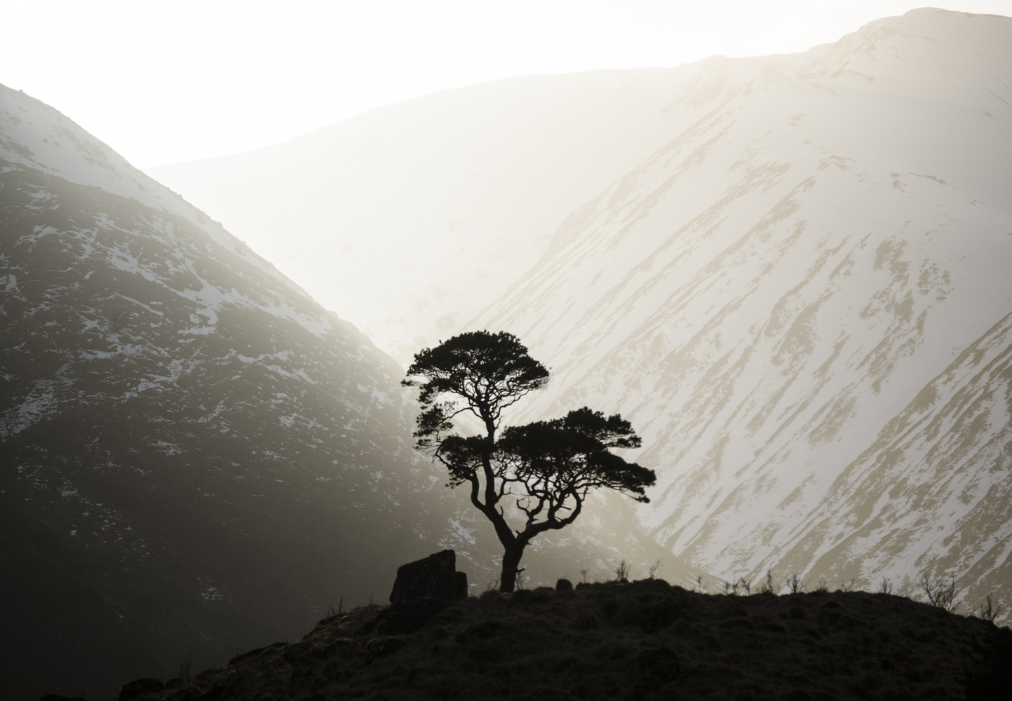 The Nevis Pine by David Russell