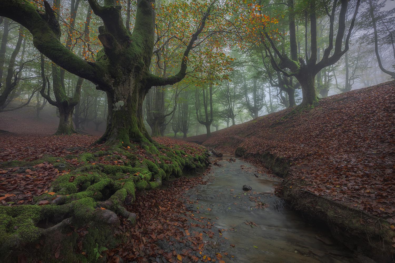Colorful Forest by Juan Romero Salamanca