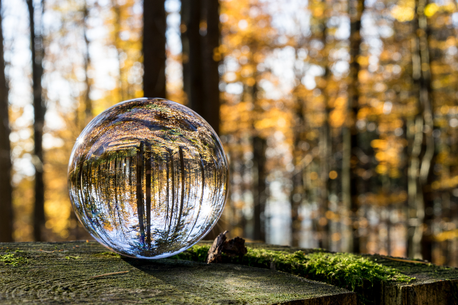 fall through a crystal ball by Otto Schlemmer
