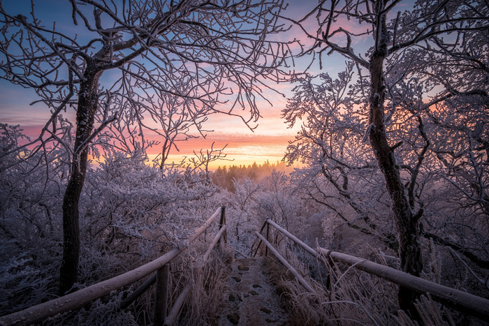 frosty dawn by Otto Schlemmer
