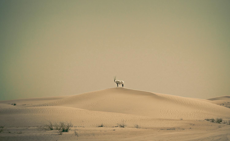 solitude by Otto Schlemmer