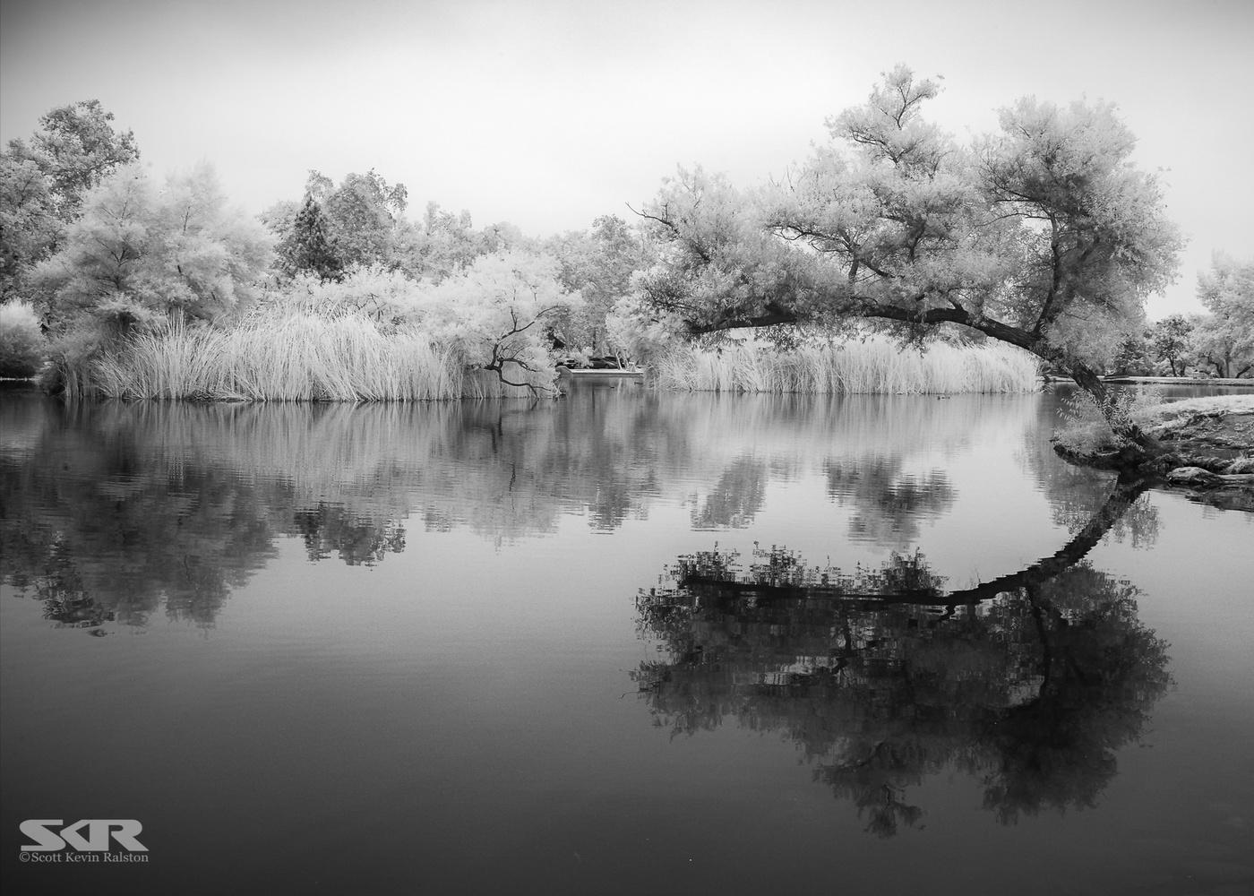 Wishbone Reflection by Scott Ralston