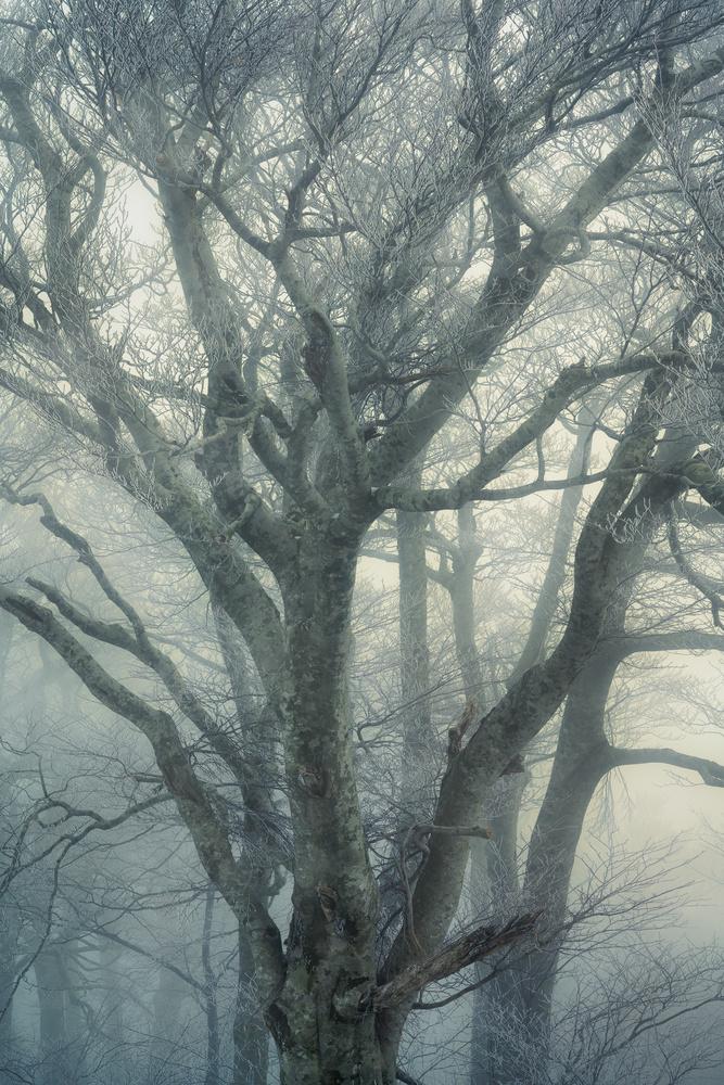 Misty ice by Taisuke Goto