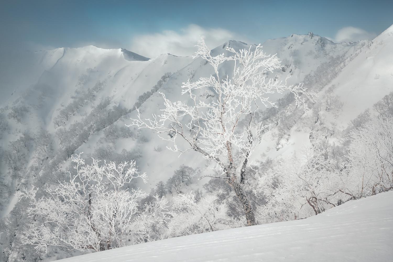 Ice tree by Taisuke Goto