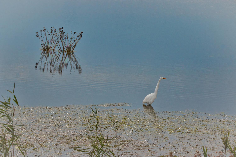 Lone Egret by MARIE LOCH
