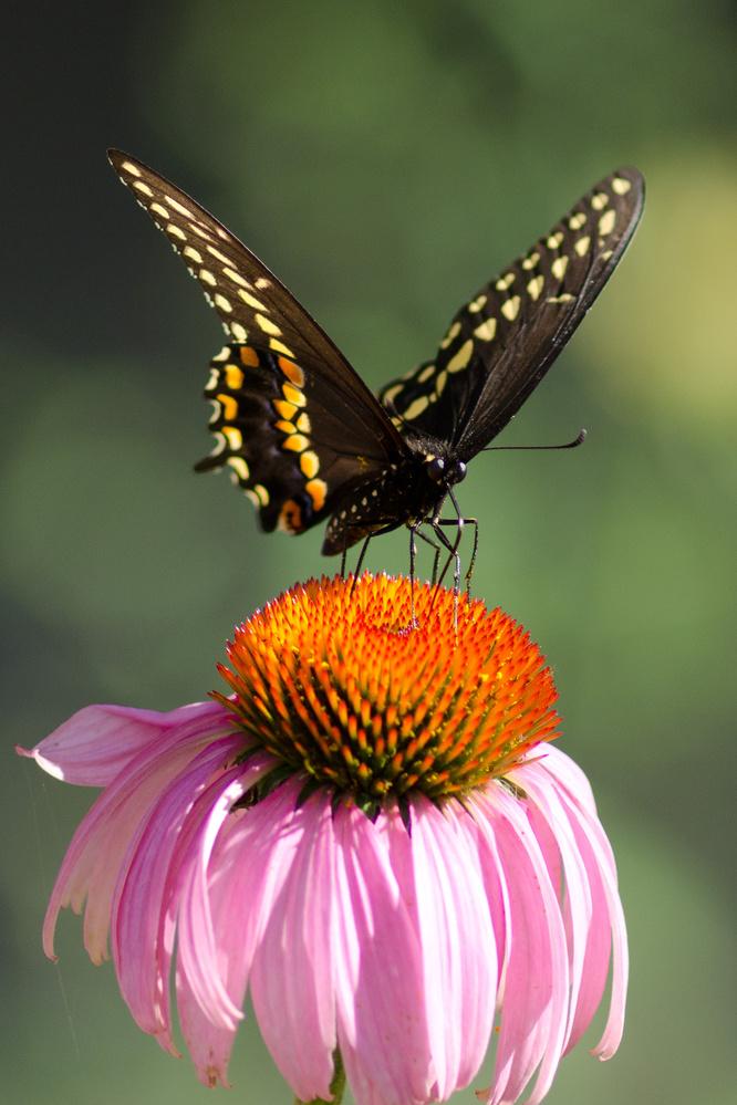 Butterfly by Wojciech Sawicki