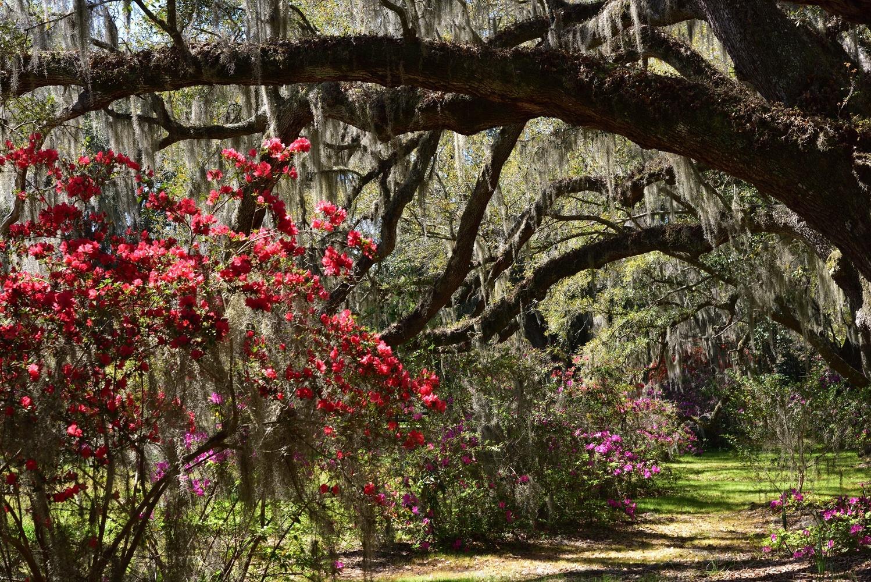Middleton Place, Charleston, SC by Michael O