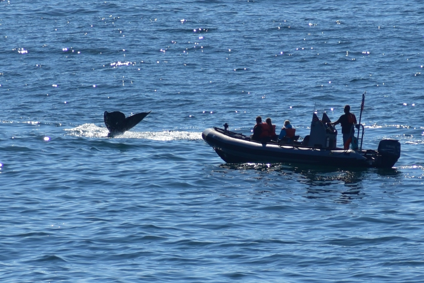 Whale Watching on the Central Oregon Coast by Michael O