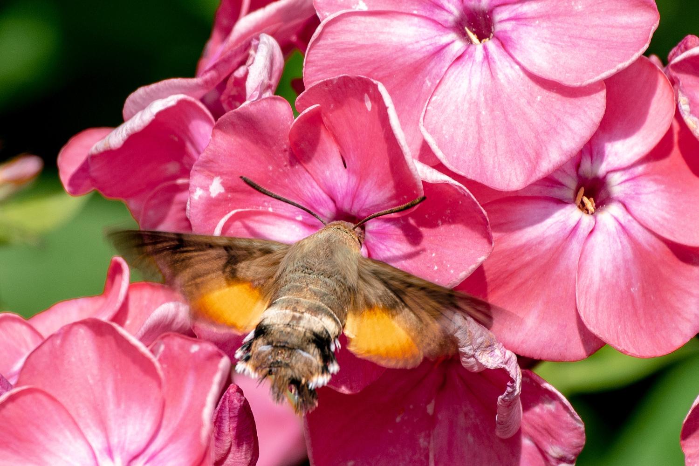 """hummingbird """"wannabe"""" by Ania Wadrzyk"""