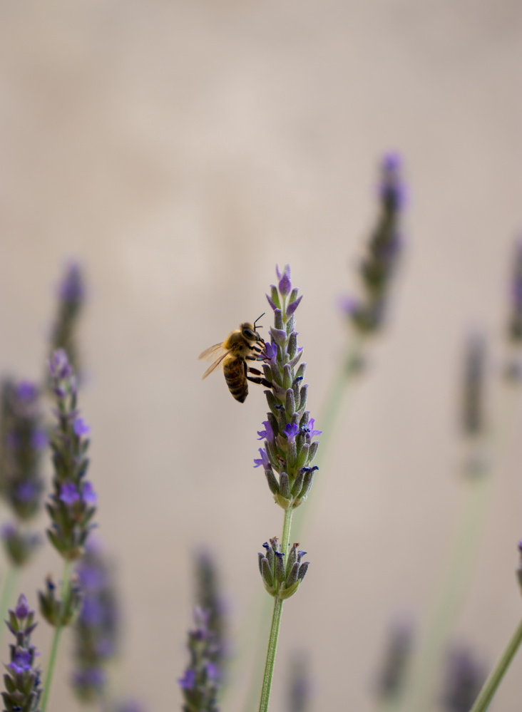 Bee life by Tasos Giannopoulos
